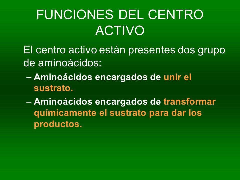 FUNCIONES DEL CENTRO ACTIVO El centro activo están presentes dos grupo de aminoácidos: –Aminoácidos encargados de unir el sustrato. –Aminoácidos encar