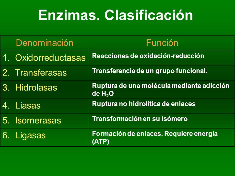 Enzimas. Clasificación DenominaciónFunción 1. Oxidorreductasas Reacciones de oxidación-reducción 2. Transferasas Transferencia de un grupo funcional.