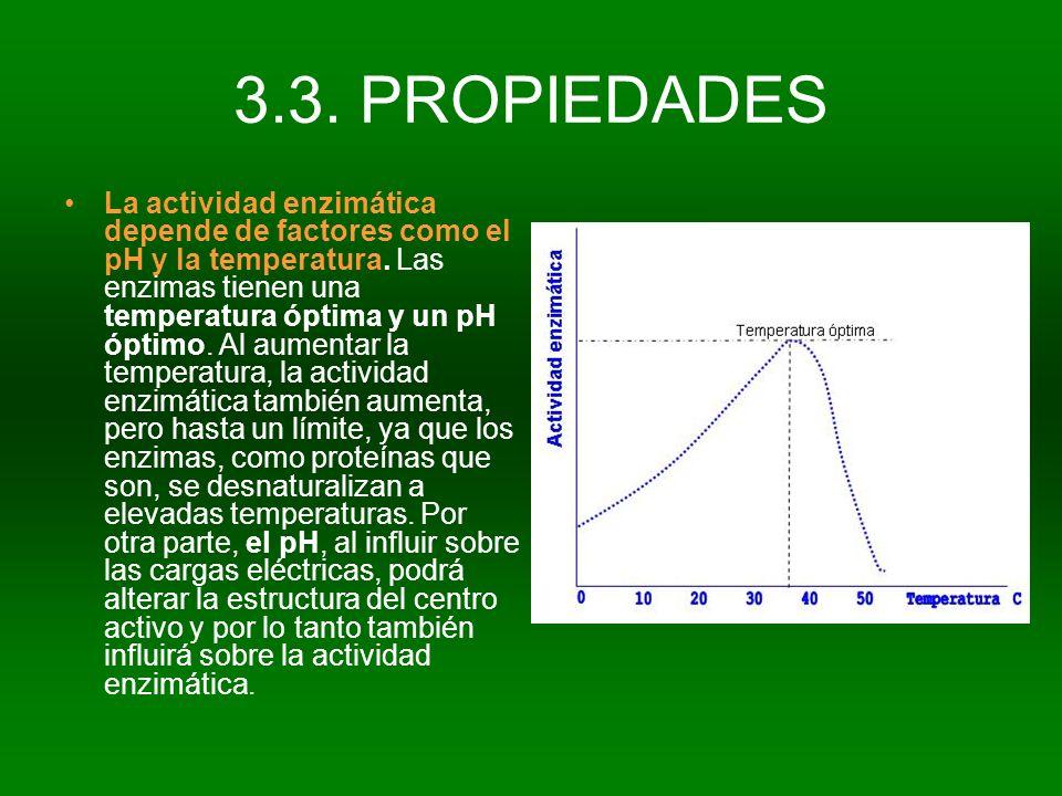 3.3. PROPIEDADES La actividad enzimática depende de factores como el pH y la temperatura. Las enzimas tienen una temperatura óptima y un pH óptimo. Al