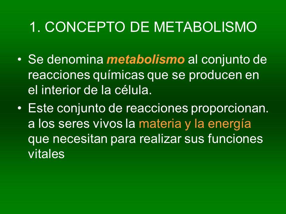 1. CONCEPTO DE METABOLISMO Se denomina metabolismo al conjunto de reacciones químicas que se producen en el interior de la célula. Este conjunto de re