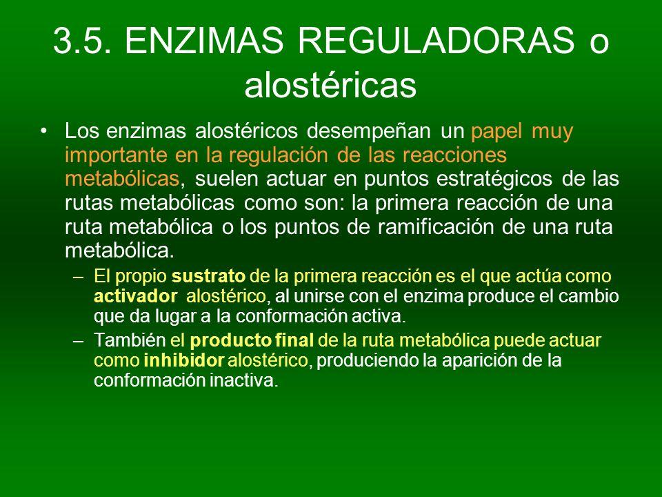 Los enzimas alostéricos desempeñan un papel muy importante en la regulación de las reacciones metabólicas, suelen actuar en puntos estratégicos de las