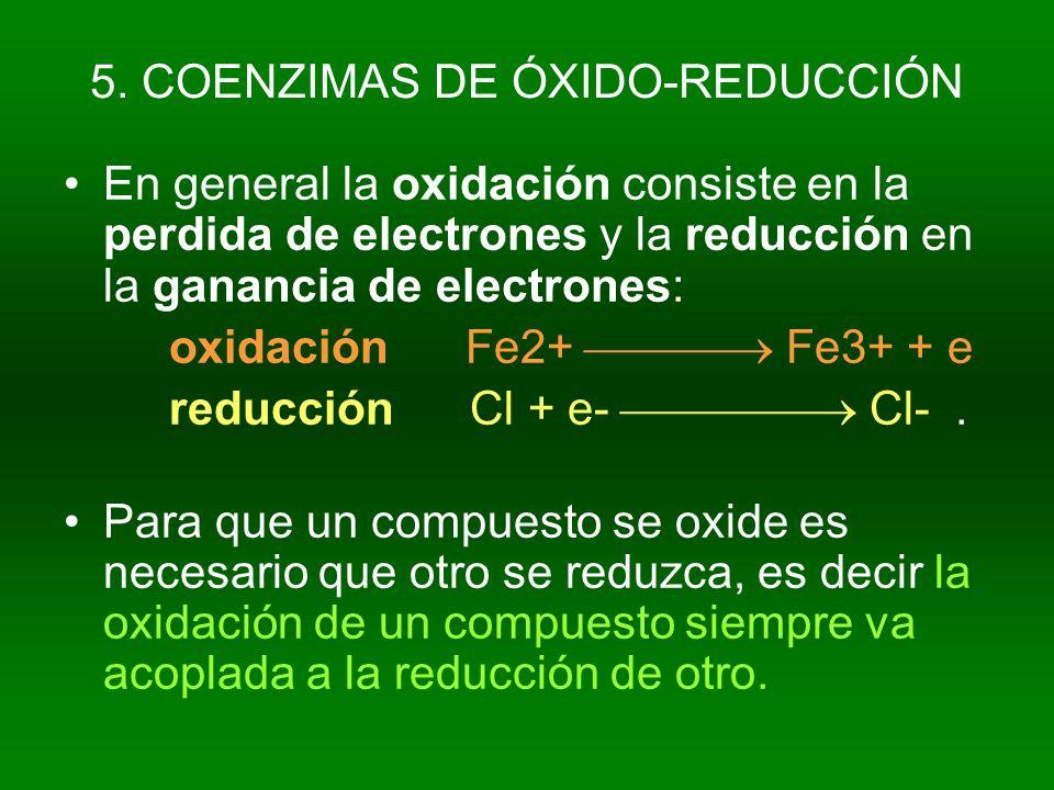 5. COENZIMAS DE ÓXIDO-REDUCCIÓN En general la oxidación consiste en la perdida de electrones y la reducción en la ganancia de electrones: oxidación Fe