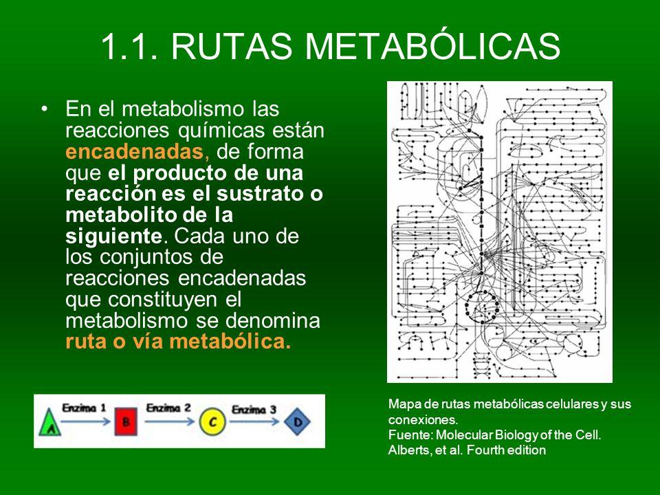 1.1. RUTAS METABÓLICAS En el metabolismo las reacciones químicas están encadenadas, de forma que el producto de una reacción es el sustrato o metaboli