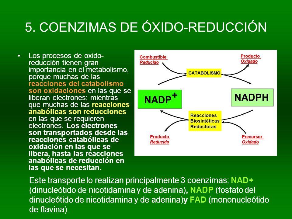 5. COENZIMAS DE ÓXIDO-REDUCCIÓN Los procesos de oxido- reducción tienen gran importancia en el metabolismo, porque muchas de las reacciones del catabo