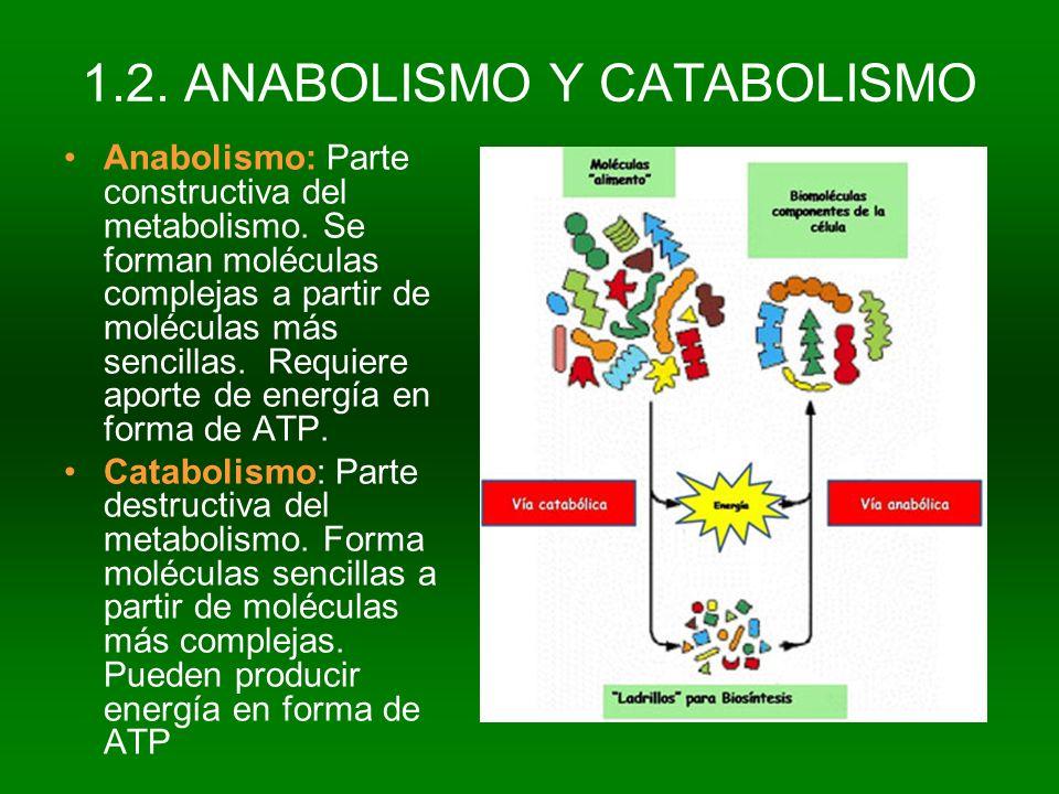 1.2. ANABOLISMO Y CATABOLISMO Anabolismo: Parte constructiva del metabolismo. Se forman moléculas complejas a partir de moléculas más sencillas. Requi