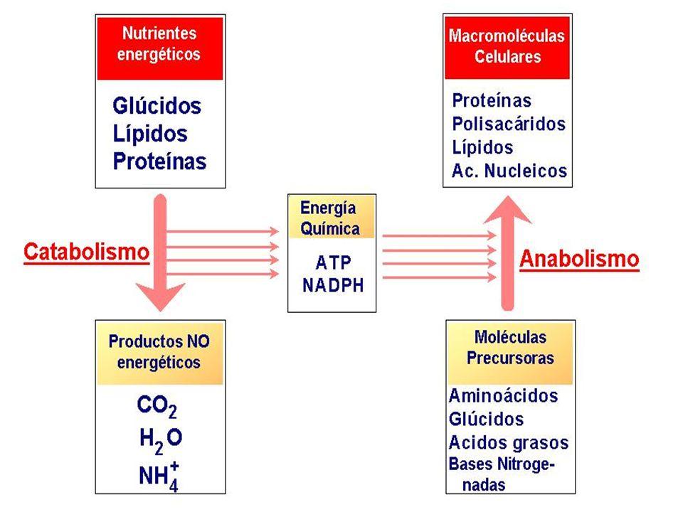 3.3.PROPIEDADES La actividad enzimática depende de factores como el pH y la temperatura.