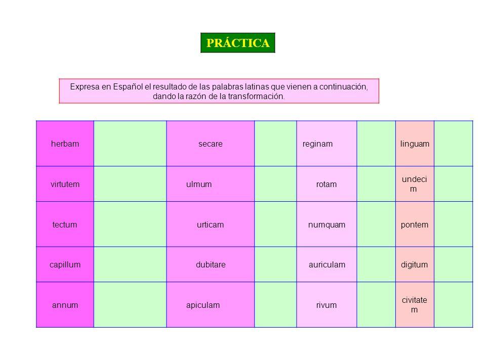 PRÁCTICA Expresa en Español el resultado de las palabras latinas que vienen a continuación, dando la razón de la transformación.