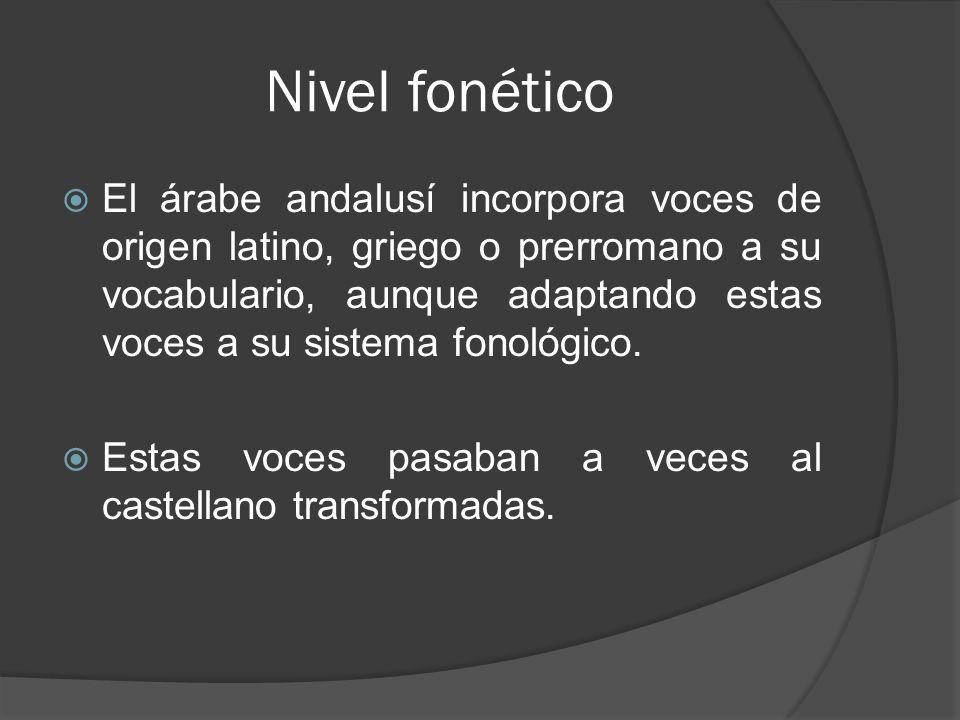 Nivel fonético El árabe andalusí incorpora voces de origen latino, griego o prerromano a su vocabulario, aunque adaptando estas voces a su sistema fon