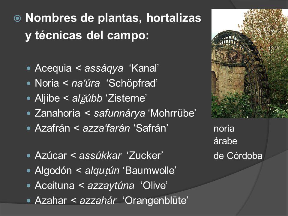 Nombres de plantas, hortalizas y técnicas del campo: Acequia < assáqya Kanal Noria < naúra Schöpfrad Aljibe < al ǧ úbb Zisterne Zanahoria < safunnárya