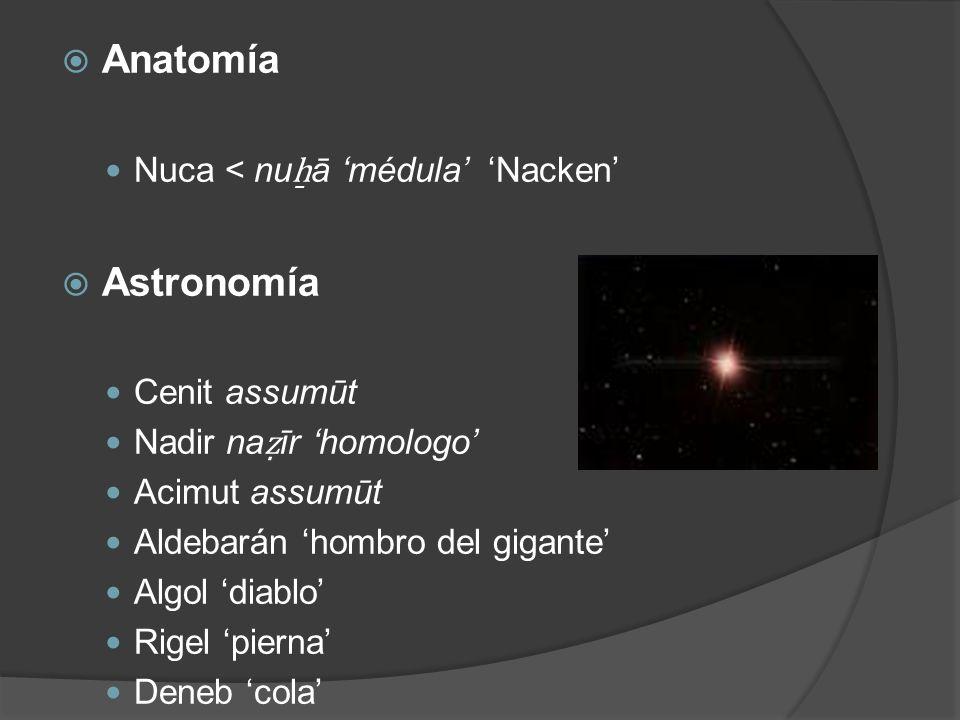 Anatomía Nuca < nu ā médula Nacken Astronomía Cenit assumūt Nadir na īr homologo Acimut assumūt Aldebarán hombro del gigante Algol diablo Rigel pierna