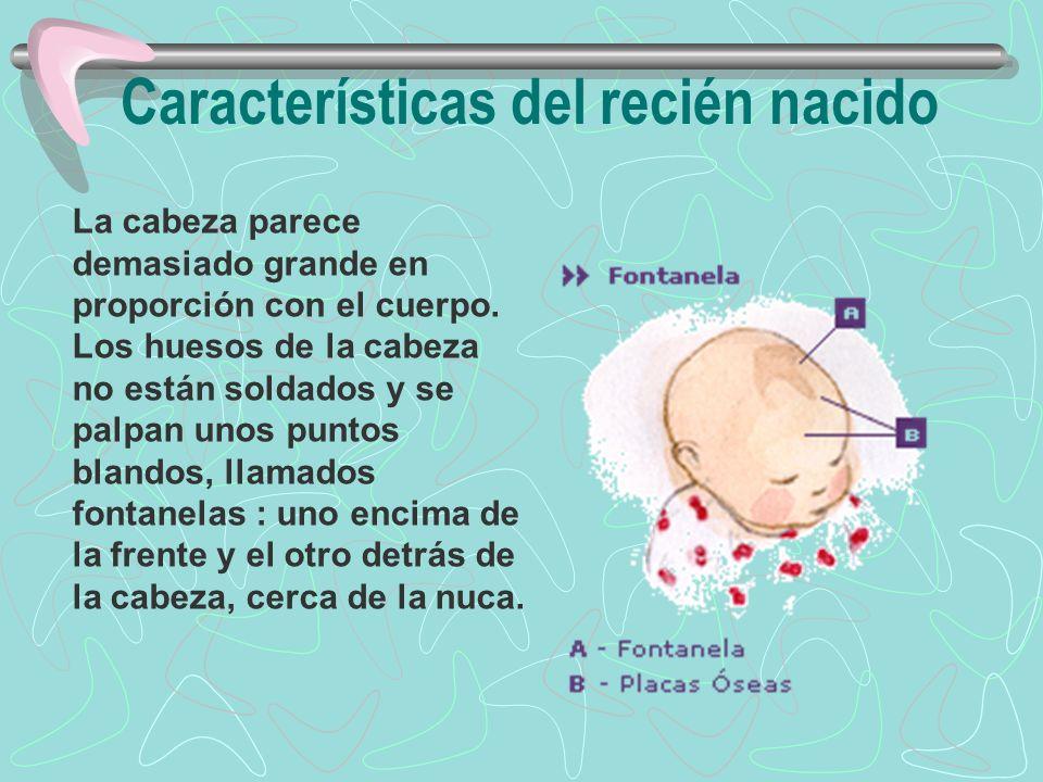 Características del recién nacido La cabeza parece demasiado grande en proporción con el cuerpo. Los huesos de la cabeza no están soldados y se palpan