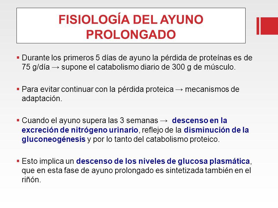 FISIOLOGÍA DEL AYUNO PROLONGADO Durante los primeros 5 días de ayuno la pérdida de proteínas es de 75 g/día supone el catabolismo diario de 300 g de m