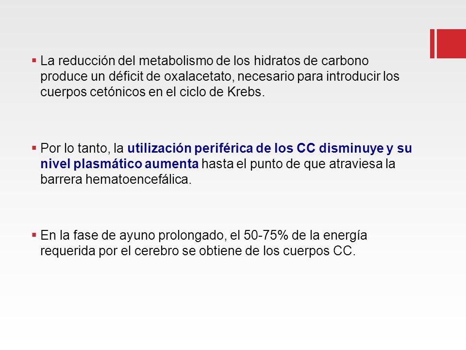 La reducción del metabolismo de los hidratos de carbono produce un déficit de oxalacetato, necesario para introducir los cuerpos cetónicos en el ciclo