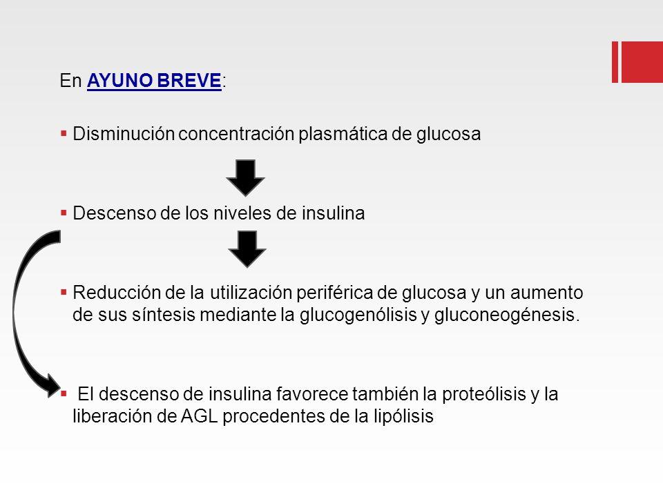 En AYUNO BREVE: Disminución concentración plasmática de glucosa Descenso de los niveles de insulina Reducción de la utilización periférica de glucosa