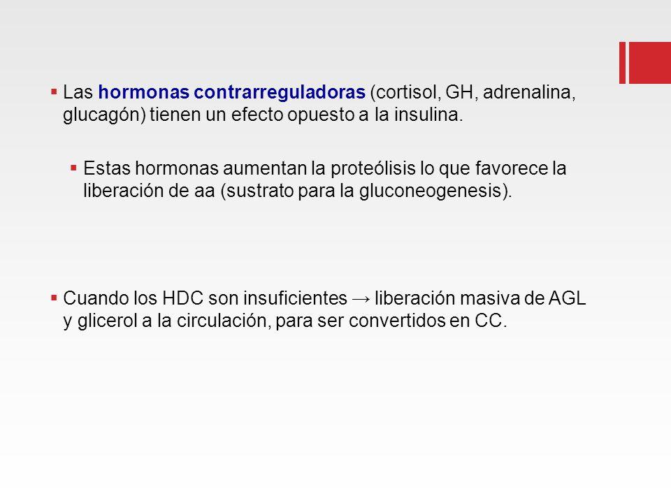 Las hormonas contrarreguladoras (cortisol, GH, adrenalina, glucagón) tienen un efecto opuesto a la insulina. Estas hormonas aumentan la proteólisis lo