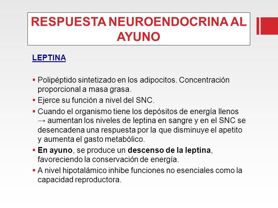 RESPUESTA NEUROENDOCRINA AL AYUNO LEPTINA Polipéptido sintetizado en los adipocitos. Concentración proporcional a masa grasa. Ejerce su función a nive
