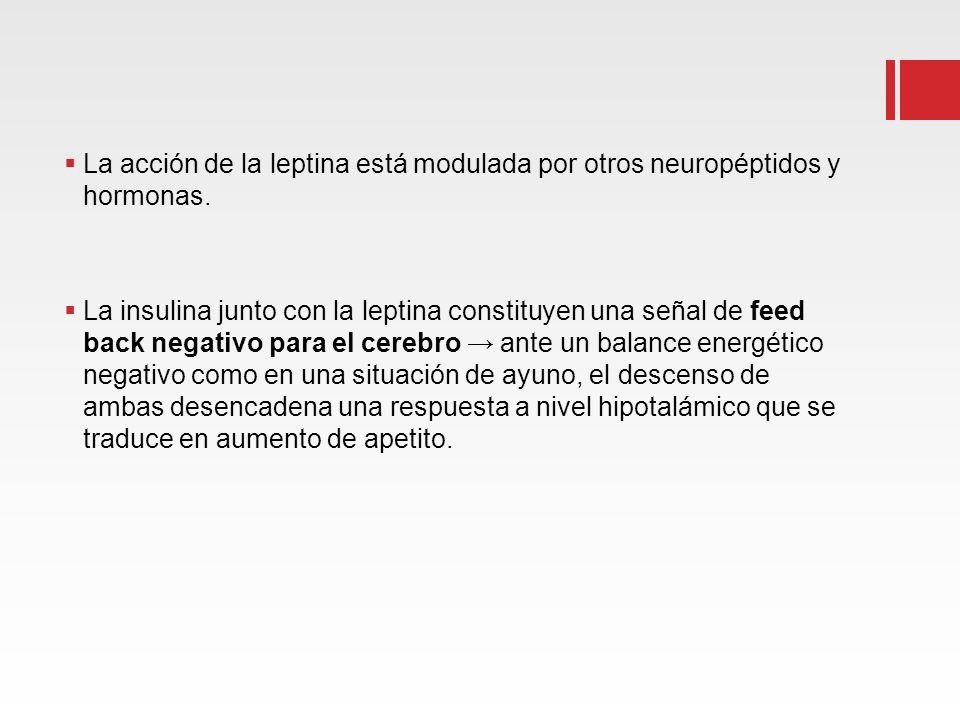 La acción de la leptina está modulada por otros neuropéptidos y hormonas. La insulina junto con la leptina constituyen una señal de feed back negativo