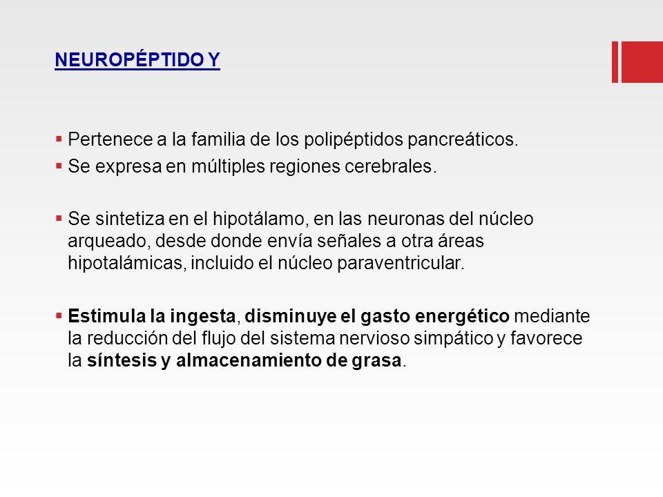 NEUROPÉPTIDO Y Pertenece a la familia de los polipéptidos pancreáticos. Se expresa en múltiples regiones cerebrales. Se sintetiza en el hipotálamo, en