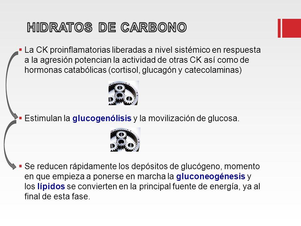 La CK proinflamatorias liberadas a nivel sistémico en respuesta a la agresión potencian la actividad de otras CK así como de hormonas catabólicas (cor