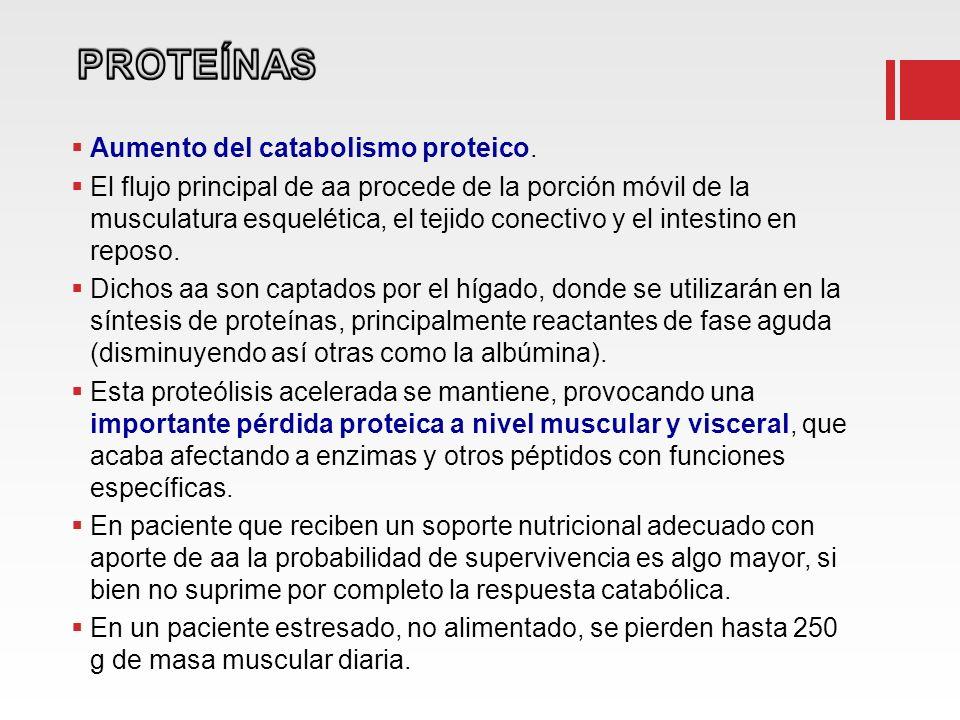 Aumento del catabolismo proteico. El flujo principal de aa procede de la porción móvil de la musculatura esquelética, el tejido conectivo y el intesti