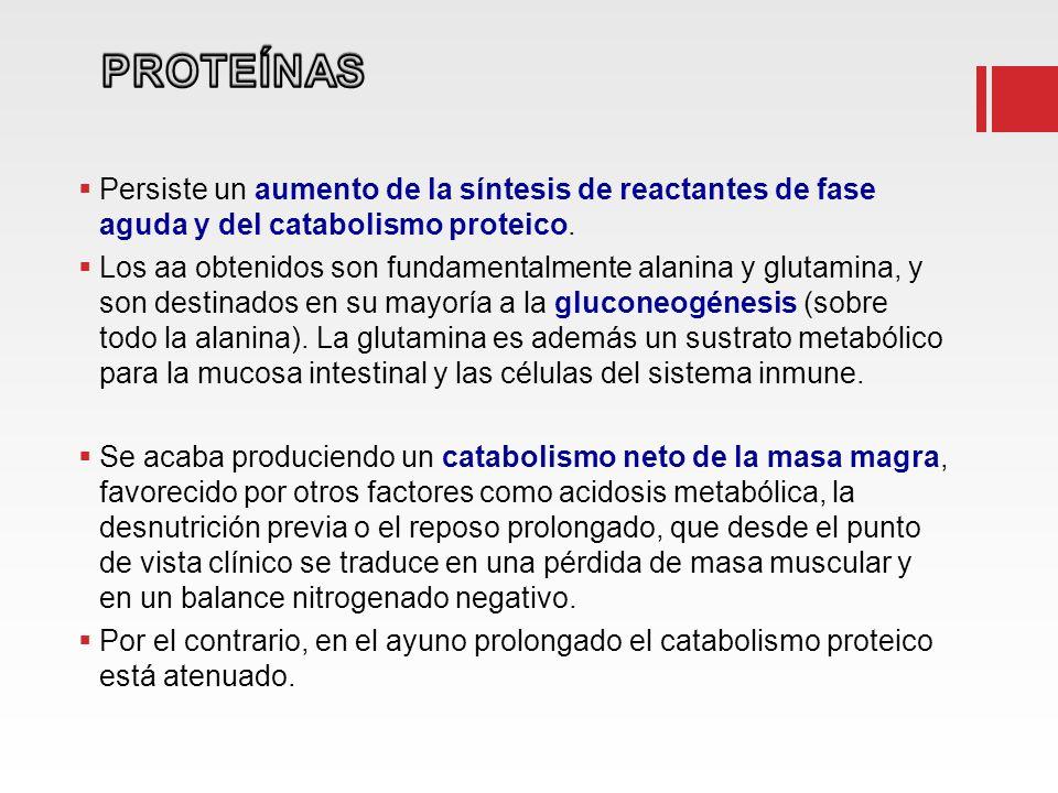 Persiste un aumento de la síntesis de reactantes de fase aguda y del catabolismo proteico. Los aa obtenidos son fundamentalmente alanina y glutamina,