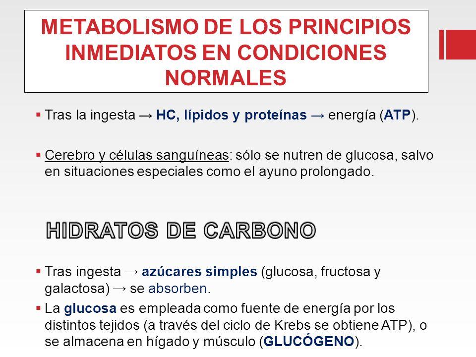 METABOLISMO DE LOS PRINCIPIOS INMEDIATOS EN CONDICIONES NORMALES Tras la ingesta HC, lípidos y proteínas energía (ATP). Cerebro y células sanguíneas: