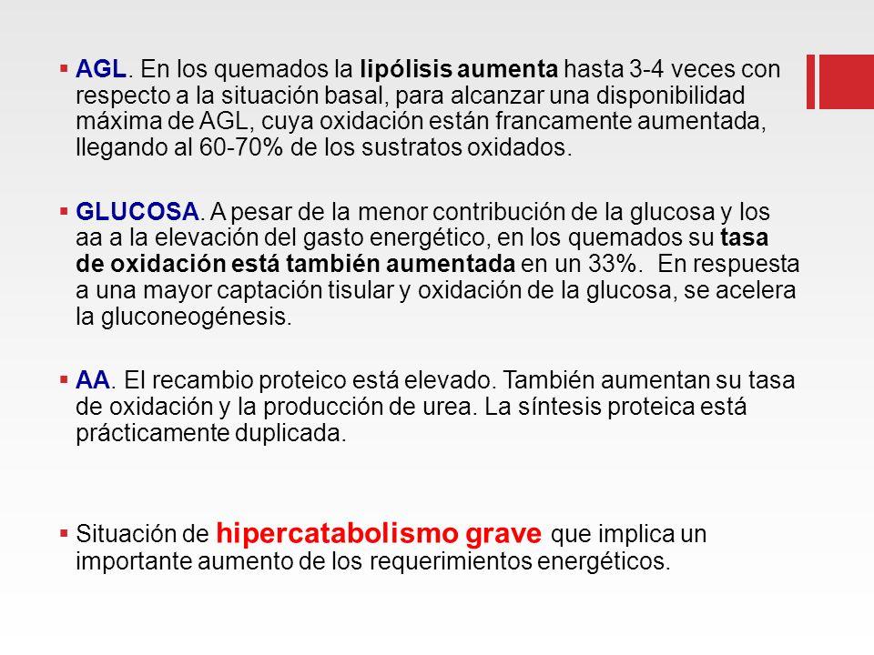 AGL. En los quemados la lipólisis aumenta hasta 3-4 veces con respecto a la situación basal, para alcanzar una disponibilidad máxima de AGL, cuya oxid