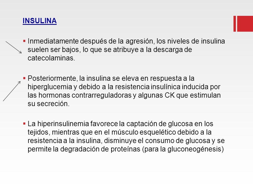 INSULINA Inmediatamente después de la agresión, los niveles de insulina suelen ser bajos, lo que se atribuye a la descarga de catecolaminas. Posterior