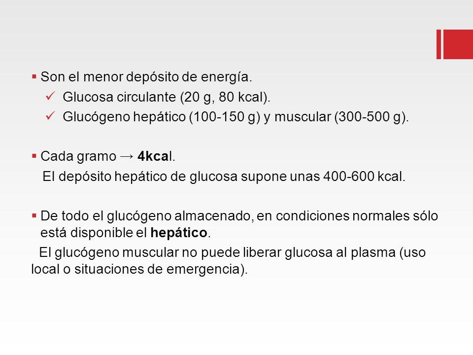 Son el menor depósito de energía. Glucosa circulante (20 g, 80 kcal). Glucógeno hepático (100-150 g) y muscular (300-500 g). Cada gramo 4kcal. El depó