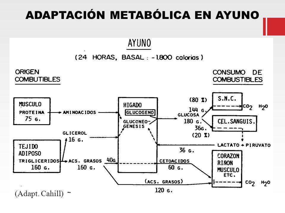 ADAPTACIÓN METABÓLICA EN AYUNO (Adapt. Cahill)