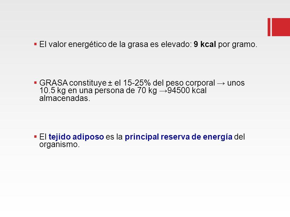 El valor energético de la grasa es elevado: 9 kcal por gramo. GRASA constituye ± el 15-25% del peso corporal unos 10.5 kg en una persona de 70 kg 9450
