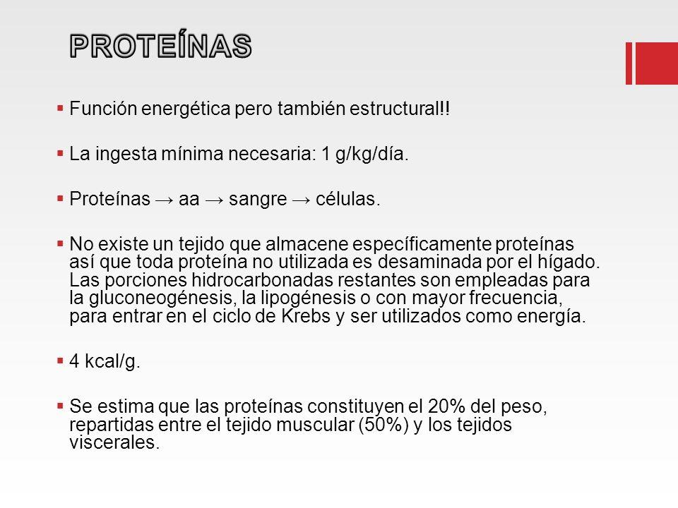 Función energética pero también estructural!! La ingesta mínima necesaria: 1 g/kg/día. Proteínas aa sangre células. No existe un tejido que almacene e