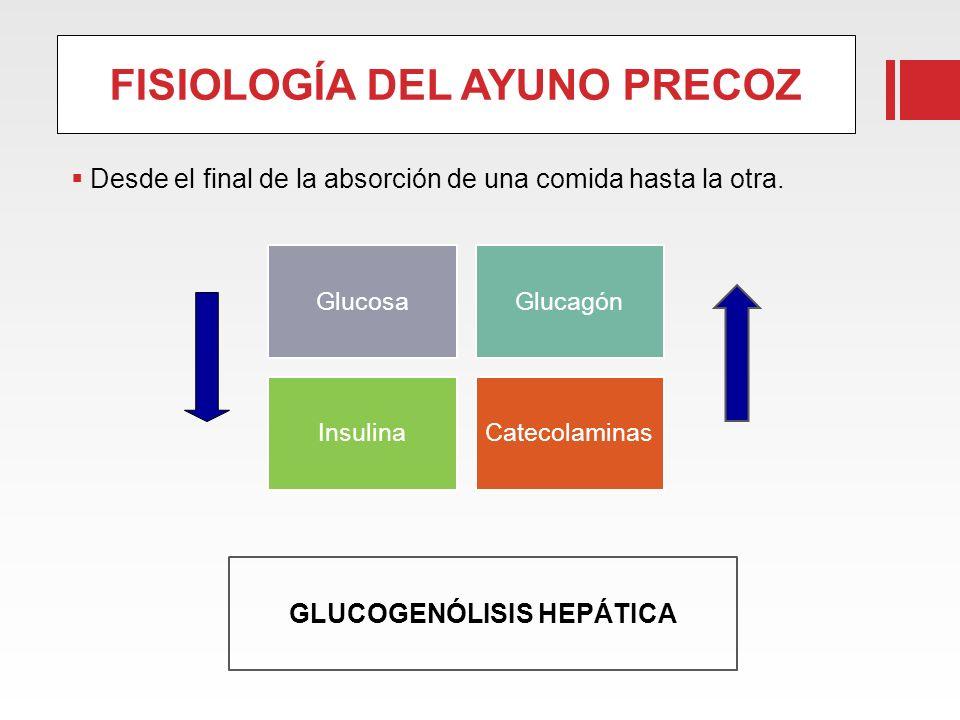 FISIOLOGÍA DEL AYUNO PRECOZ Desde el final de la absorción de una comida hasta la otra. GlucosaGlucagón InsulinaCatecolaminas GLUCOGENÓLISIS HEPÁTICA