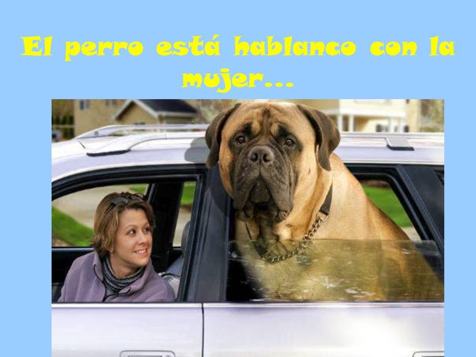 El perro está hablanco con la mujer…