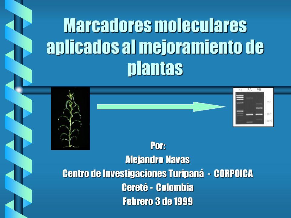 Marcadores moleculares aplicados al mejoramiento de plantas Por: Alejandro Navas Centro de Investigaciones Turipaná - CORPOICA Cereté - Colombia Febre