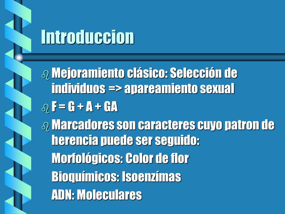 Introduccion b Marcadores del AND: En o fuera de los genes: (Exones o intrones) En o fuera de los genes: (Exones o intrones) Polimorficos => cartografia Polimorficos => cartografia RFLPs y basados en PCR ( RAPDs, STSs, SRSs y AFLPs) RFLPs y basados en PCR ( RAPDs, STSs, SRSs y AFLPs) b Mapa genetico de ligamiento: Construidos con base en la frecuencia como dos marcadores se heredan juntos (Ligamiento)