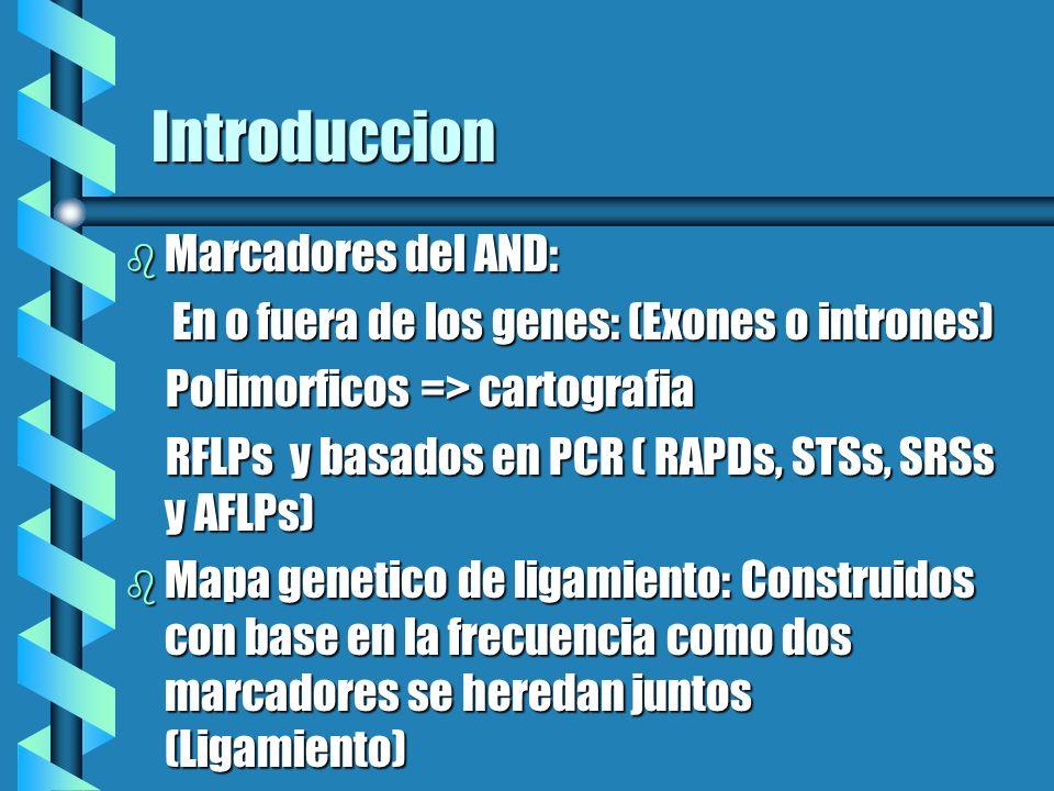 Introduccion b Marcadores del AND: En o fuera de los genes: (Exones o intrones) En o fuera de los genes: (Exones o intrones) Polimorficos => cartograf