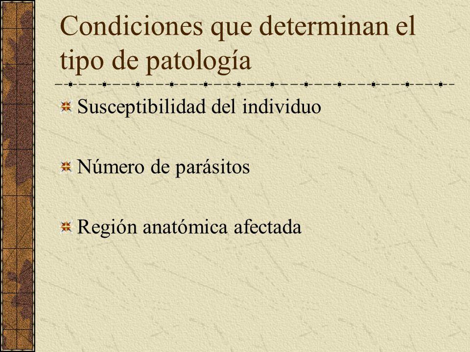 Condiciones que determinan el tipo de patología Susceptibilidad del individuo Número de parásitos Región anatómica afectada
