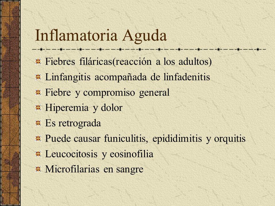 Inflamatoria Aguda Fiebres filáricas(reacción a los adultos) Linfangitis acompañada de linfadenitis Fiebre y compromiso general Hiperemia y dolor Es r