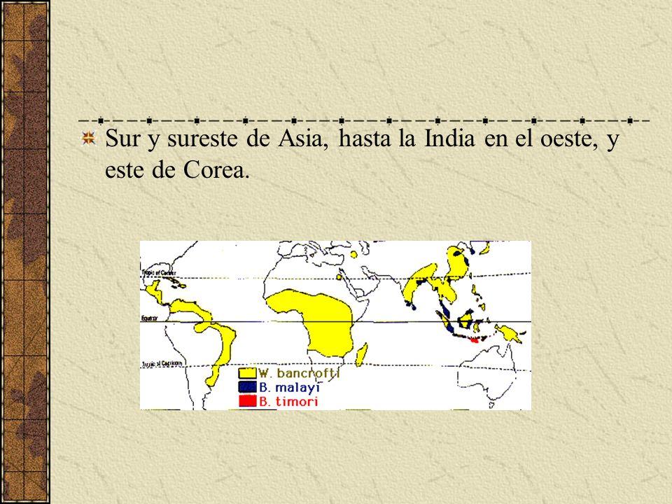 Sur y sureste de Asia, hasta la India en el oeste, y este de Corea.