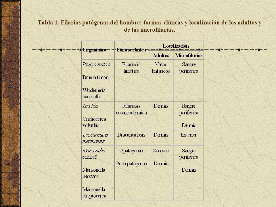 Tabla 1. Filarias patógenas del hombre: formas clínicas y localización de los adultos y de las microfilarias.
