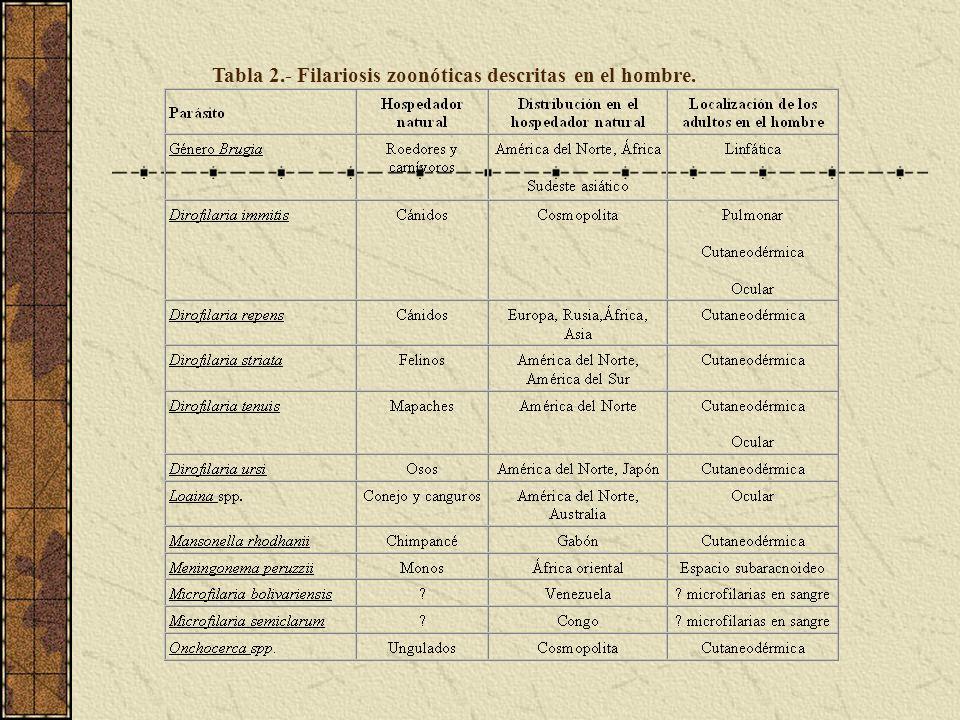 Tabla 2.- Filariosis zoonóticas descritas en el hombre.