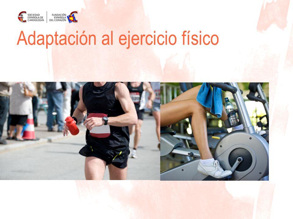 www.fundaciondelcorazon.com Metabolismo anaeróbico- láctico o glucólisis anaeróbica: En los esfuerzos intensos pero mas prolongados.