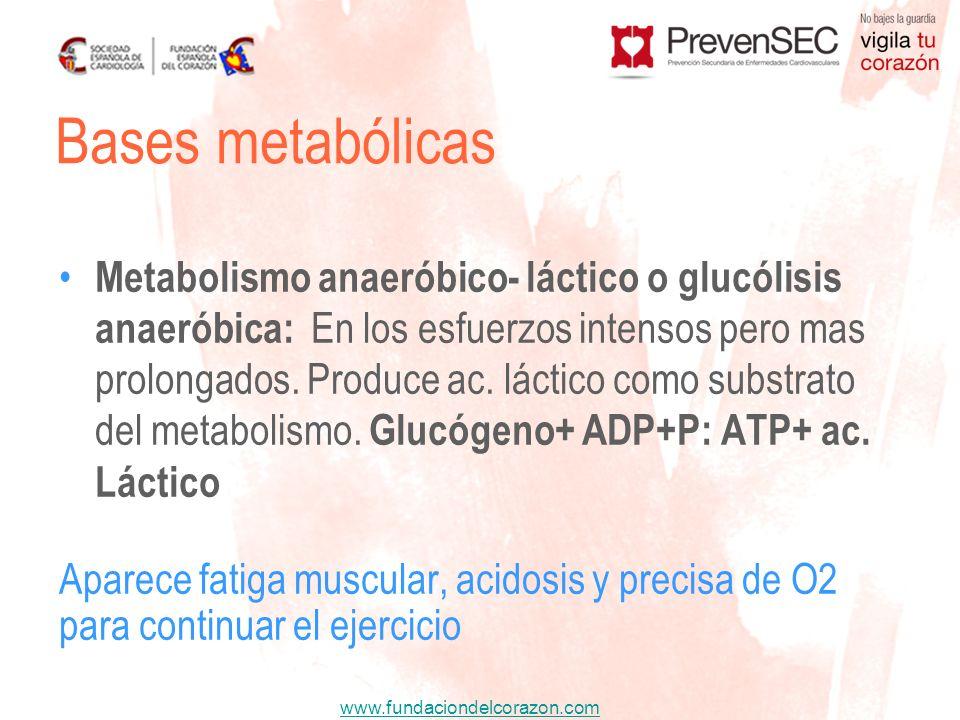 www.fundaciondelcorazon.com Metabolismo anaeróbico- láctico o glucólisis anaeróbica: En los esfuerzos intensos pero mas prolongados. Produce ac. lácti
