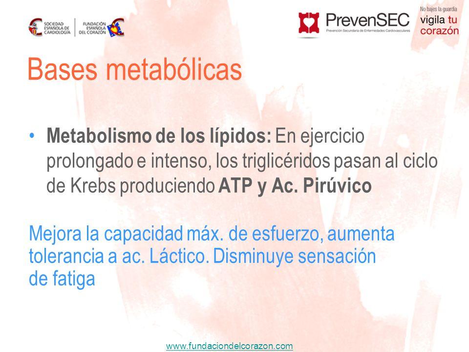 www.fundaciondelcorazon.com Metabolismo de los lípidos: En ejercicio prolongado e intenso, los triglicéridos pasan al ciclo de Krebs produciendo ATP y
