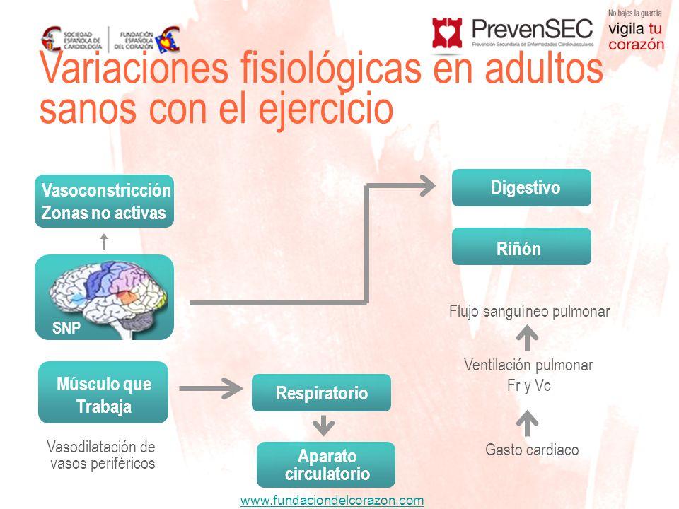 www.fundaciondelcorazon.com Variaciones fisiológicas en adultos sanos con el ejercicio Vasodilatación de vasos periféricos Flujo sanguíneo pulmonar Ve