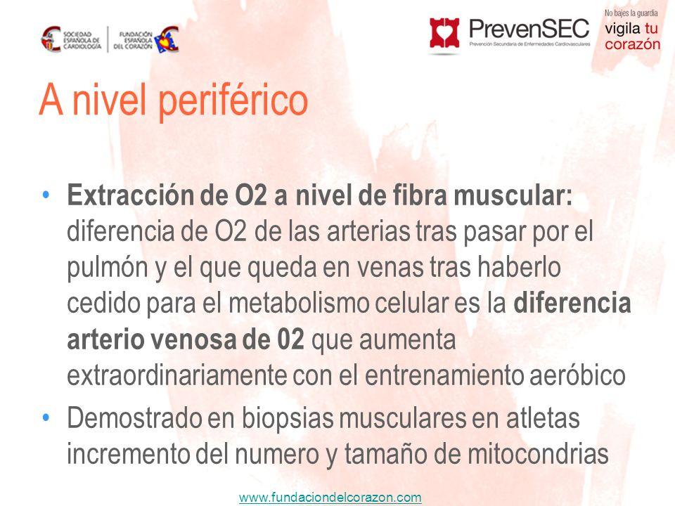 www.fundaciondelcorazon.com Extracción de O2 a nivel de fibra muscular: diferencia de O2 de las arterias tras pasar por el pulmón y el que queda en ve