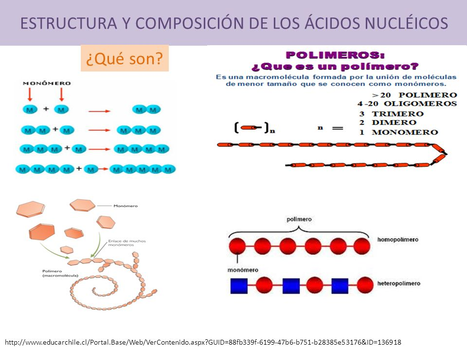 ESTRUCTURA Y COMPOSICIÓN DE LOS ÁCIDOS NUCLÉICOS ¿Qué son? http://www.educarchile.cl/Portal.Base/Web/VerContenido.aspx?GUID=88fb339f-6199-47b6-b751-b2