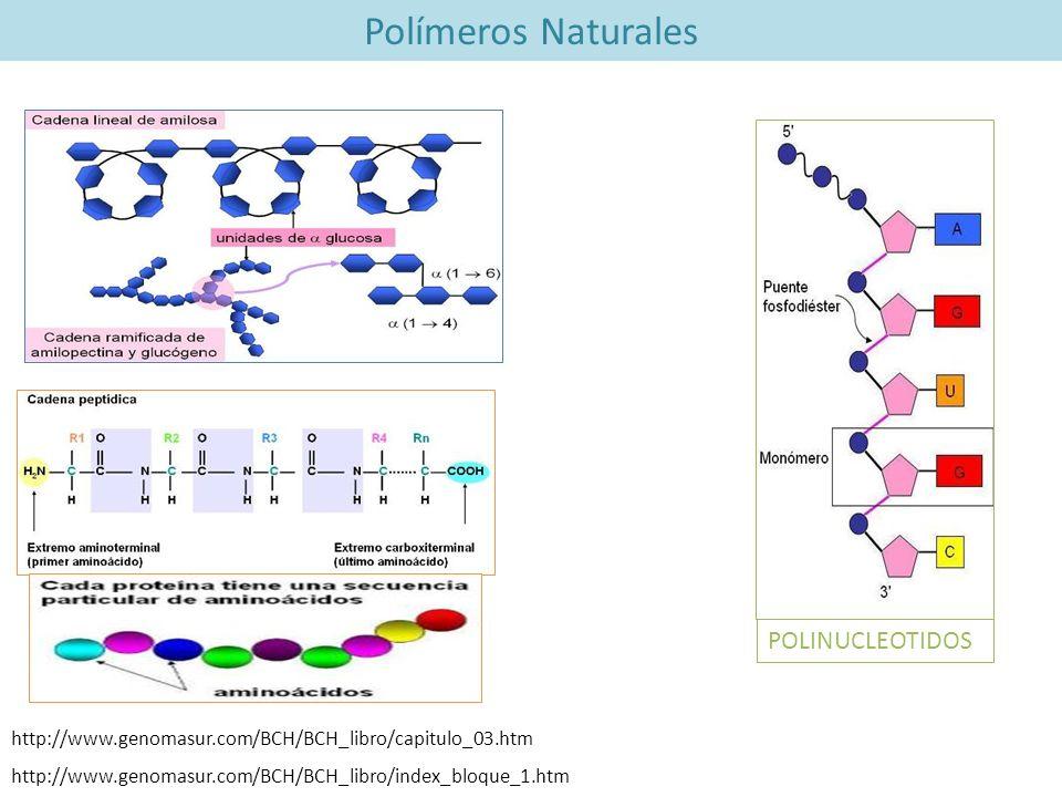 http://www.genomasur.com/BCH/BCH_libro/index_bloque_1.htm http://www.genomasur.com/BCH/BCH_libro/capitulo_03.htm Polímeros Naturales POLINUCLEOTIDOS