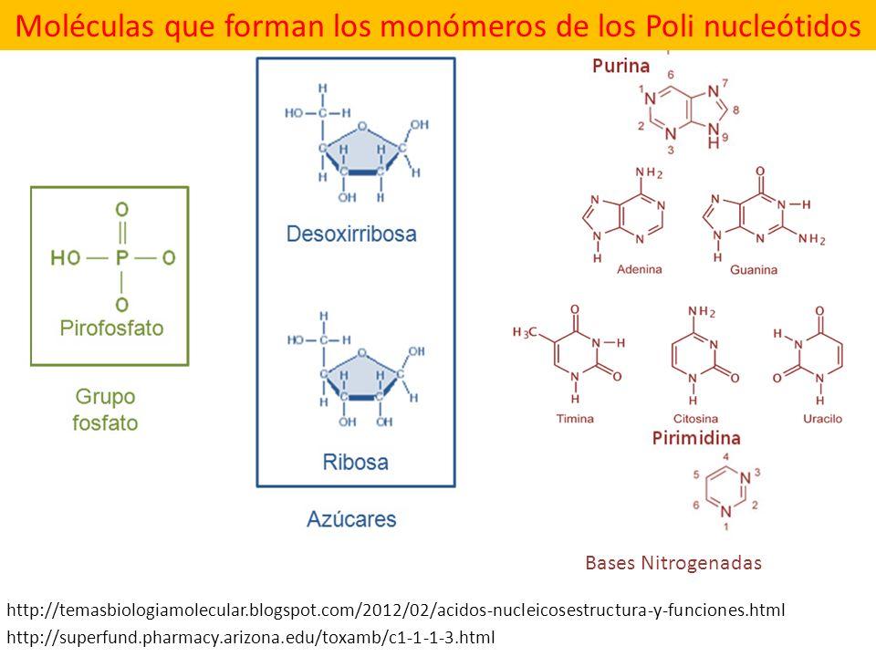 http://superfund.pharmacy.arizona.edu/toxamb/c1-1-1-3.html Moléculas que forman los monómeros de los Poli nucleótidos http://temasbiologiamolecular.bl